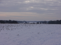 Snowy Fields.jpg