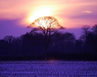 Sunset over Fields 2.jpg