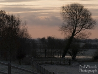 1401 Frosty Field & Trees.jpg