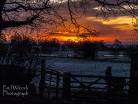 1401 Sunset over Frosty Fields 2.jpg